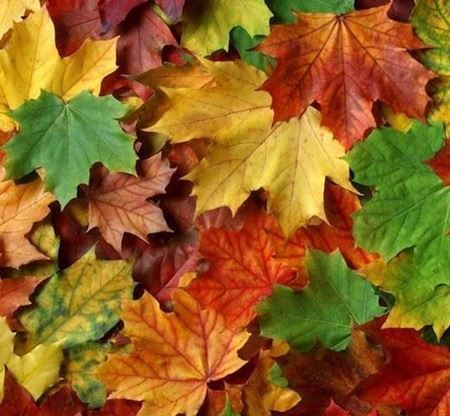 Bild für Kategorie Herbst-Aktion
