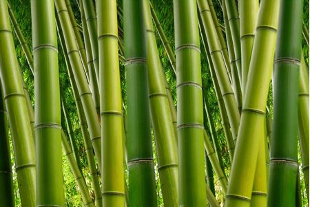 Bild für Kategorie Bambus (Bambus-Viskose)