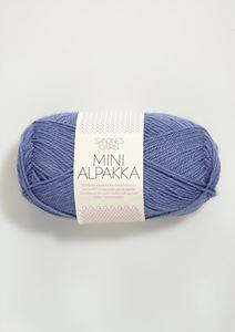 Bild von Mini Alpaka -Lavendel -5834